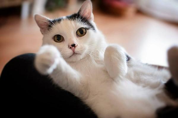 Kropek – Koci Przytulak Pilnie Szuka Domu Na Zawsze! 5